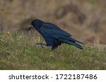 A black rook on the side of the ...