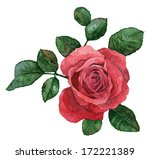 Single Rose Flower On A White...