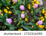Close Up Of A Flower Bed In...