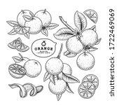 vector sketch citrus fruit... | Shutterstock .eps vector #1722469069
