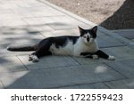 Domestic Cat Sits On The...