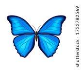 Blue Morpho Butterfly On White...