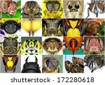 Insects. Close Up.