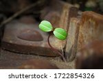 Small photo of Green sprout grows in a scrap metal dump. A young sprout grows in a polluted environment. A sprouted sprout on a background of rusty piece of iron and garbage