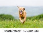 Stock photo i m coming 172305233