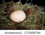 Little unborn chick zipping through his egg shell to hatch - stock photo