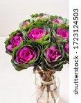 Brassica Decorative Cabbage Fo...