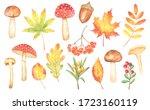 Set Of Watercolor Mushrooms ...