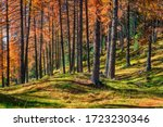 Impressive Autumn Forest In The ...