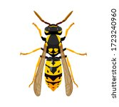 wasp isolated image on a white... | Shutterstock .eps vector #1723240960