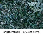 Winter White Frost On Plant In...