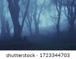 A Spooky Forest. On A Foggy ...