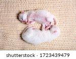 Newborn Little Kittens For The...