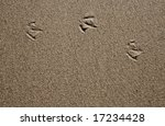 Three Seagull Foot Prints In...