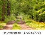 Forest Path Among Old Trees In...