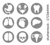 set of icon internal organs   Shutterstock .eps vector #172364444
