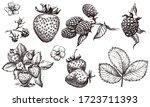 strawberry and blackberry hand...   Shutterstock .eps vector #1723711393