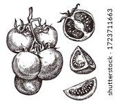 tomato. hand drawn set. vector... | Shutterstock .eps vector #1723711663