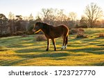Sunset In The New Forest With...