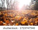 Beautiful Autumn Park....