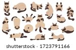 sleeping cats poses. flat color ... | Shutterstock .eps vector #1723791166