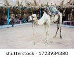 Sahara Desert   Egypt  ...