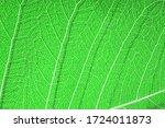 Green Leaf Veined Macro Shot....