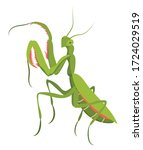 illustrations of praying mantis.... | Shutterstock .eps vector #1724029519