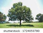Beautiful Tree On A Sunny Day...