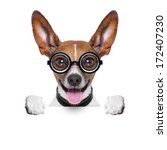 Stock photo crazy silly dog with funny glasses behind blank placard 172407230