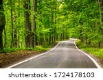 Beautiful Tree Lined Road In...