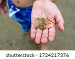 Child Holding Baby Horseshoe...