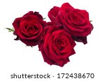 Three Dark Red Roses Isolated...