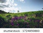Blooming Purple Field Flowers...