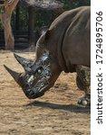 Rhino Robot Photo Graphic...