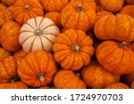 Pumpkins For Sale In Autumn At...