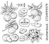 vector sketch apple decorative... | Shutterstock .eps vector #1724995579