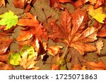 Bright Autumn Leaves In A...