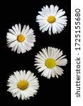 The Flowerhead Of Four Daisy...