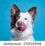 Cute Dog Studio Shot On An...