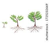 tree vector. illustration of a...   Shutterstock .eps vector #1725232669