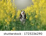 My Photos Beautiful Dogs And...