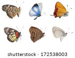 Butterfly Side View Collection...