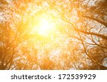 tree look up with sun light... | Shutterstock . vector #172539929