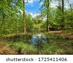 Kaltenhofer Moor In Schleswig...