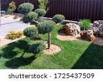 Modern Conifer Garden Design...