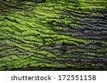 Green Bark Background