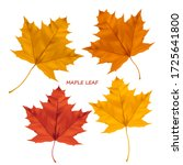 Set Of Realistic Maple Leaves...