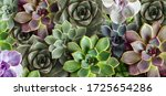 Many Beautiful Succulent Plants ...