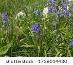 Spring Flowering English...
